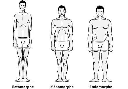 Differents type de morphologie en musculation 1