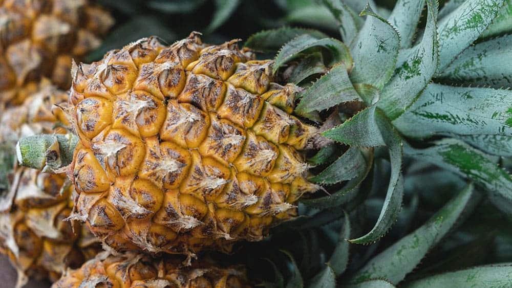 aliment bruleur de graisse l'ananas