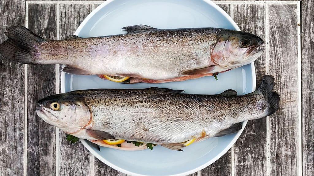 poisson maigre pour la musculation