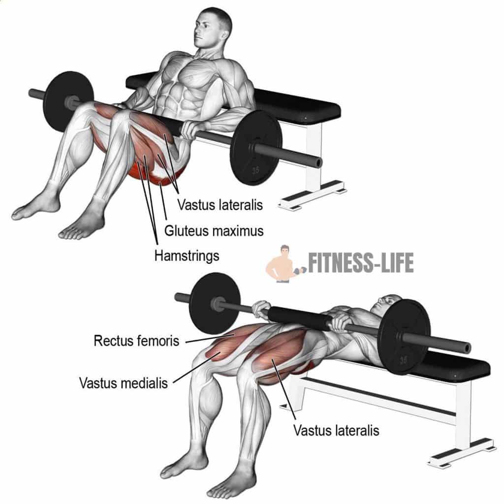 Exercice de musculation Hip Thrust