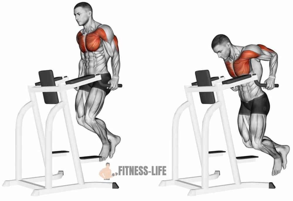exercice dips pectoraux mouvement et muscle
